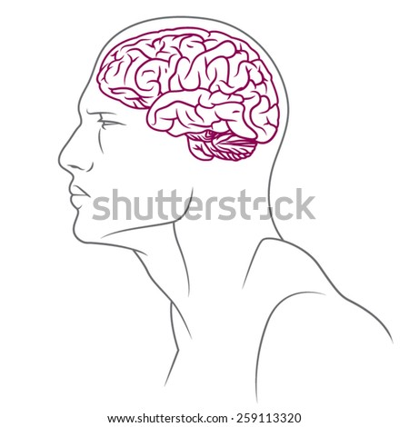 Illustration of male body with brain. - stock vector