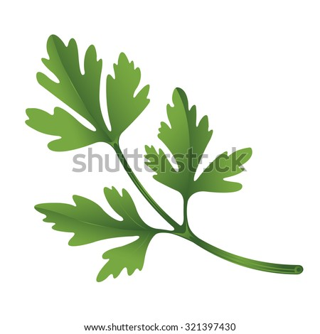 Illustration of parsley on white background. - stock vector