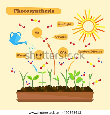 process of photsynthesis Photosynthesis is the process by which plants, some bacteria, and some protistans use the energy from sunlight to produce sugar, which cellular respiration converts.