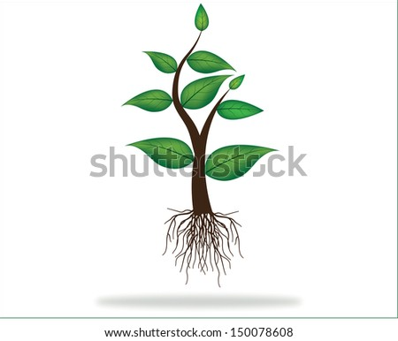 illustration of plant sapling With roots growing on abstract background - stock vector