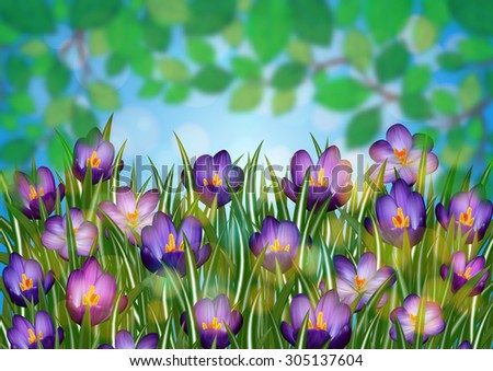 Illustration of purple crocus flowers with blurred green leaves background