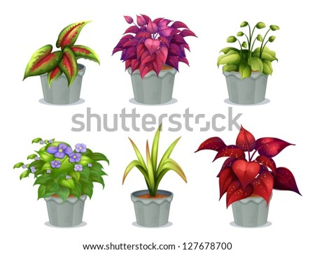 Illustration of six different plants on a white background - stock vector