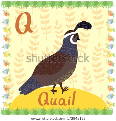 Illustration of smiling quail on the background with floral elements. Vector card of animal alphabet - stock vector