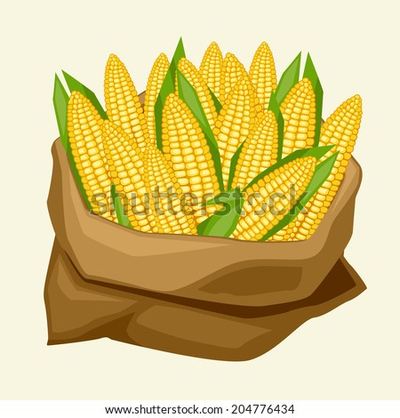 Illustration of stylized sack with fresh ripe corn cobs. - stock vector