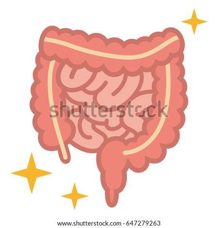 Illustration Large Intestine Small Intestine Stock Vector Hd