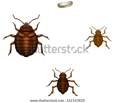 Illustration of the life cycle of a bed bug on a white background - stock vector