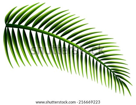 Illustration of the palm leaves on a white background