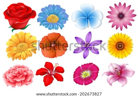 Illustration of the set of different flowers on a white background