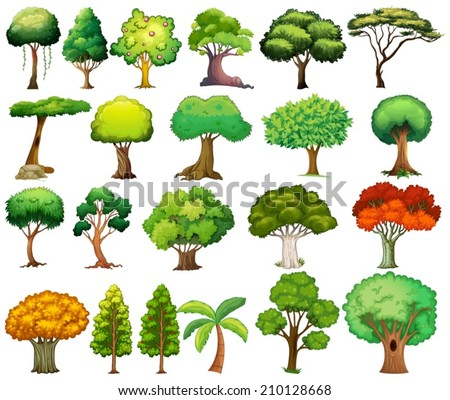 Illustration of the set of trees on a white background - stock vector