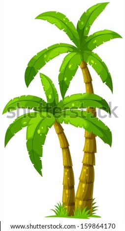 Illustration of the two palm trees on a white background - stock vector