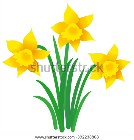 Illustration of three daffodils with leaves on white background; Vector graphic of Easter motif - stock vector