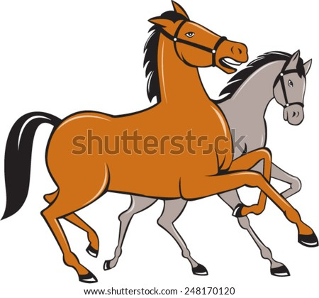 Illustration of two horses prancing side by side set on isolated white background done in cartoon style.  - stock vector
