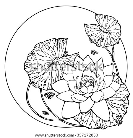 illustration of water lily, lotus, feng shui symbol