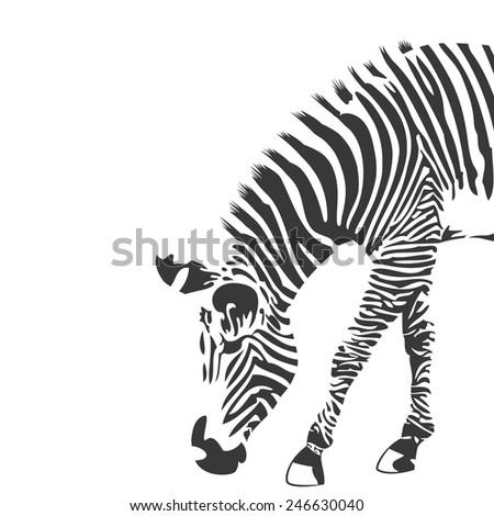 Illustration of zebra in black and white. Animal silhouette in vector - stock vector