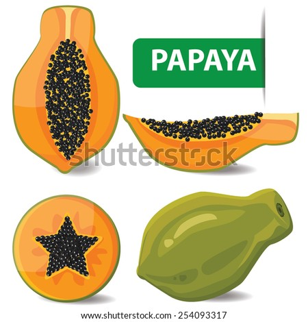 illustration papaya on white background