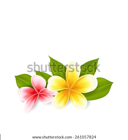 Illustration pink and yellow frangipani (plumeria), exotic flowers isolated on white background - vector - stock vector