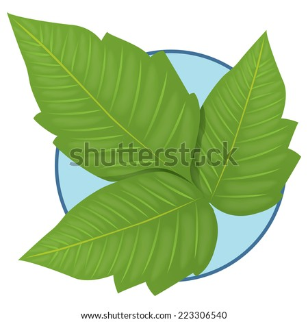 Illustration representing Nature Plant Poison Ivy  - stock vector
