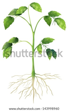 Illustration showing a green plant