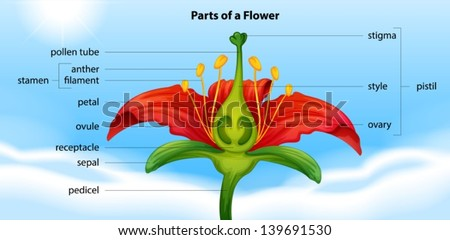 Illustration showing the anatomy of a flower - stock vector