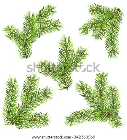 Illustration Spruces Branches Isolated on White Background. Traditional Elements for New Year Design - Vector - stock vector