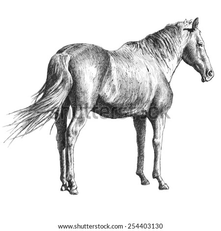 illustration with a horse. hand drawn. - stock vector