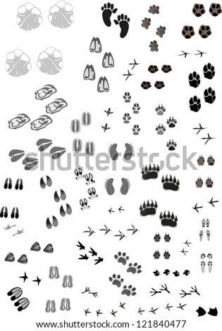 illustration with animal and human tracks isolated on white