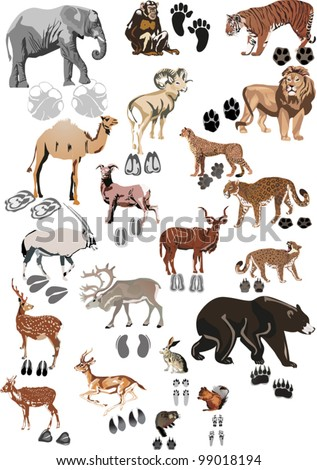 illustration with animals and its tracks isolated on white - stock vector