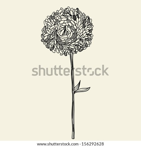 Illustration with aster - stock vector