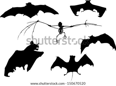 illustration with bat collection isolated on white background