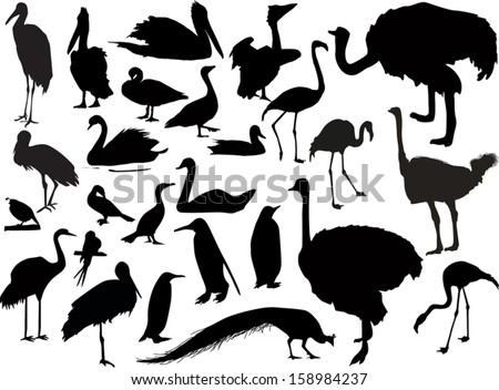 illustration with birds collection on white background