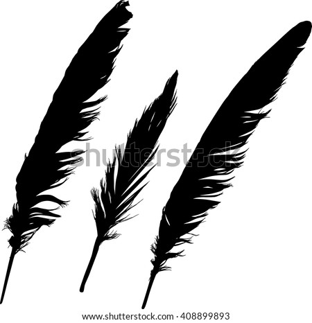 illustration with black feathers on white background