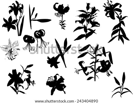 illustration with black lily flowers silhouettes isolated on white background - stock vector