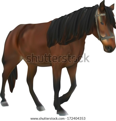 illustration with brown horse isolated on white background