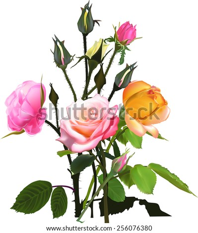 illustration with bunch of rose flowers isolated on white background - stock vector
