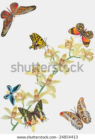 illustration with butterflies and yellow orchids on light background - stock vector