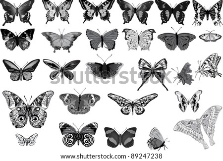 illustration with butterflies collection isolated on white background - stock vector