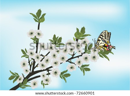 illustration with cherry tree flowers and butterfly on blue background - stock vector