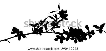 illustration with cherry tree flowers isolated on white background - stock vector