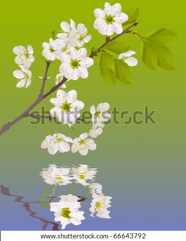 illustration with cherry tree flowers on green background - stock vector