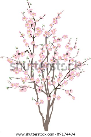 illustration with cherry tree flowers on white background - stock vector