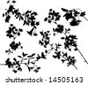 illustration with cherry tree flowers silhouette on white background - stock photo
