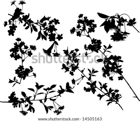 illustration with cherry tree flowers silhouette on white background - stock vector