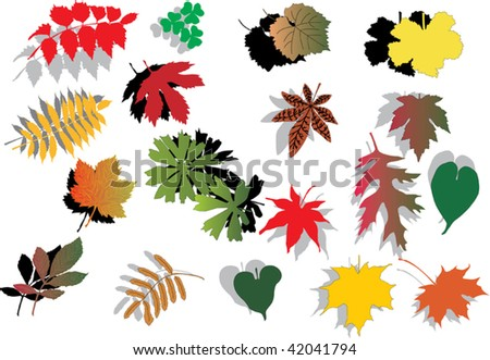 illustration with collection of different foliage - stock vector