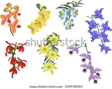 illustration with collection of orchids isolated on white background - stock vector