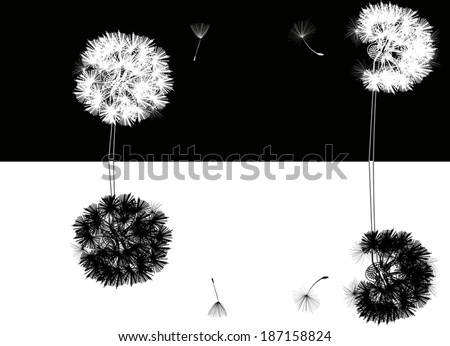 illustration with dandelions on black and white background