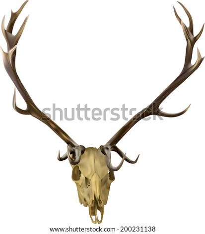 illustration with deer antlers isolated on white background
