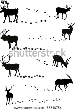 illustration with deers and its tracks isolated on white - stock vector