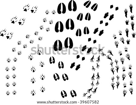 illustration with different animal tracks isolated on white - stock vector
