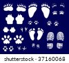 illustration with different animals and human tracks collection - stock vector