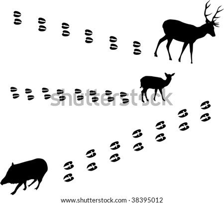 Cartoon Pig Tracks on deer tracks